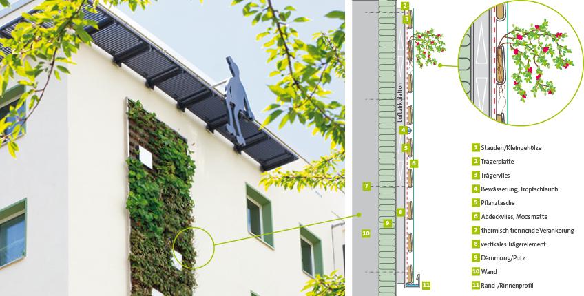 Grafik-Fassadenbegruenung